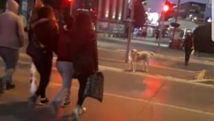 Kırmızı ışıkta insanlar geçti, köpek bekledi