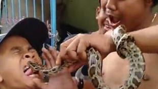 Oynadıkları yılan çocuğun dilini soktu