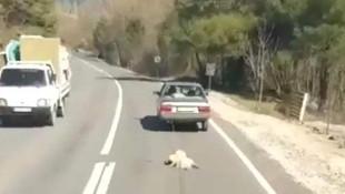 Vicdansız ! Köpeği arkasında sürükledi