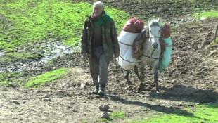 Gülbahar bitkisi, köylülerin gelir kaynağı oldu