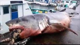 Köpekbalığının ağzındakini görenler gözlerine inanamadı