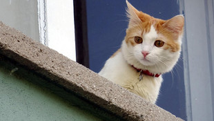 Kedi besleyenleri yıkan haber! Erkeklerde ereksiyonu engelliyor...