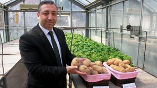 Milli patates geliyor