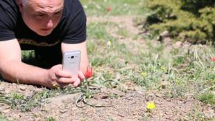 Türkiye'de yetişen bu çiçeği koparana 60 bin TL ceza