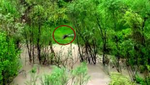 Zap Suyu'nda su samuru görüntülendi