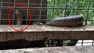 İtfaiye bu sefer bir yılanı kurtardı