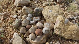 Adıyamanlı çoban 85 milyon yıllık fosil buldu