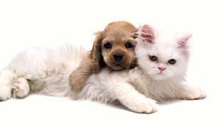 Evcil hayvan besleyen milyonlarca kişiyi ilgilendiren düzenleme