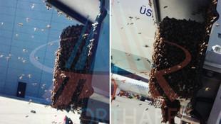 İstanbul Havalimanı'nı arılar bastı !