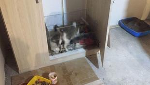 Başı kesilmiş 5 kedi yavrusu bulundu