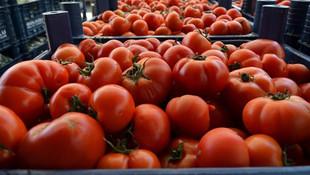 Rusya 51 ton domatesi daha iade etti
