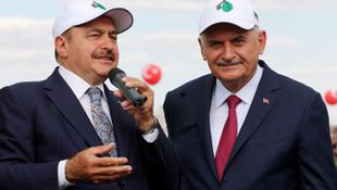 AK Parti ''milyarlarca ağaç diktik'' demişti ama…