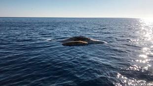 Akdeniz'de tüyler ürperten görüntü