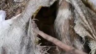 Ormanlık alanda çuvalın içinde bulundular !