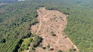 İstanbul'da binlerce ağaç daha kesildi