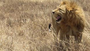 14 aslan parktan kaçtı: ''Evlerinizden çıkmayın''