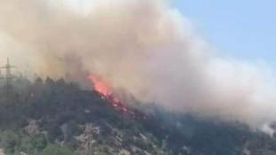 Bilecik'te orman yangını