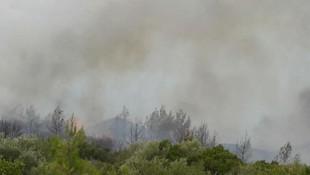 Önce Dalaman şimdi de Milas! Orman yangınları sürüyor