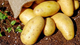 AK Parti'den ''patates'' iddialarına açıklama !