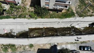 İstanbul'da virüs alarmı ! Sivri sineklerden bulaşıyor