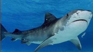 Tanınmış yüzücüye köpek balığı saldırdı