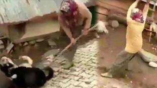 Kavga eden köpeklere öldüresiye dayak kamerada