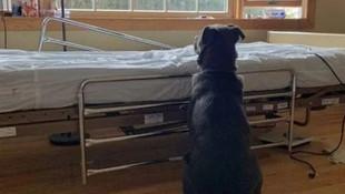 Ölen sahibinin hastanedeki yatağının başından ayrılmadı