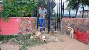 Pitbull köpeklerin koruduğu villaya polis baskını