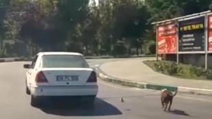 Köpeğine eziyet eden kişiye 773 TL para cezası