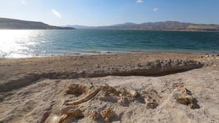 Kayseri'de 7.5 milyon yıllık fosiller bulundu