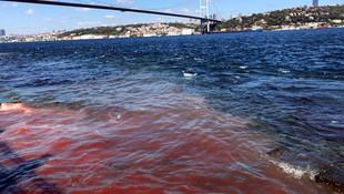 İstanbul Boğazı yine kana bulandı ! Şok görüntü