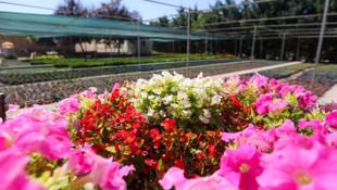 Yenimahalle 4 mevsim rengarenk