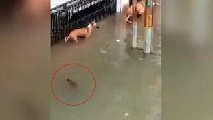 Sel suları ile şehre gelen timsah, köpeğe saldırdı