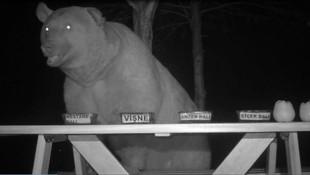 Tesise dadanan ayılara bal testi yaptı