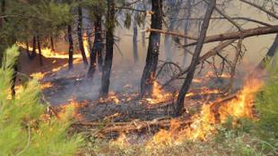 Bakan açıkladı: İzmir'deki yangın kontrol altına alındı