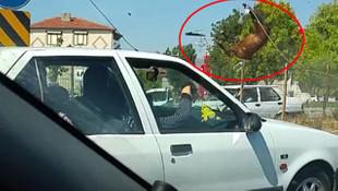 Otomobilin çarptığı atlar telef oldu ! Feci kaza kamerada