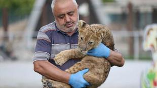 Annesinin istemediği yavru aslana evladı gibi bakıyor