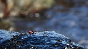 Şile sahailinde ''siyah'' alarm ! O görüntünün sırrı çözüldü