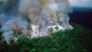 Apple Amazon'daki yangın için harekete geçti