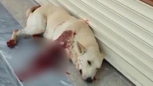 Köpeği av tüfeğiyle vurdu !