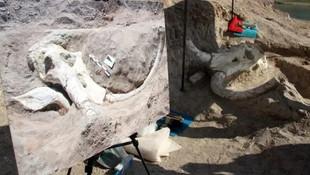 Kayseri'de 7.5 milyon yıllık dev fosil bulundu