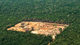 Amazonlar'da ağaç katliamı