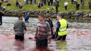 Geleneksel balina avında 23 balina katledildi