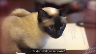 Ankara Büyükşehir Belediyesi'nin kadrolu kedisi teftişte