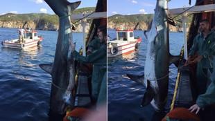 Marmara'da köpekbalığı şaşkınlığı