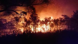 Muğla'da yine orman yangını ! Gece çıktı hala devam ediyor