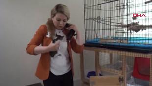 Makam odasında yaralı hayvanlara bakan müdüre ceza