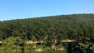 Kartal Belediyesi'nden Aydos Ormanı etkinliği