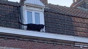 Fransa'da çatıda gezen panter dünya gündemine oturdu