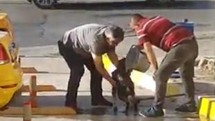 Taksiciler sokak köpeğini yıkadı